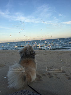 ビーチに座っている犬の写真・画像素材[1909882]