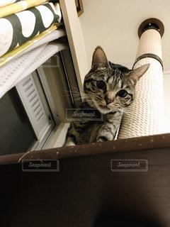 猫さんとキャットタワーの写真・画像素材[2046114]