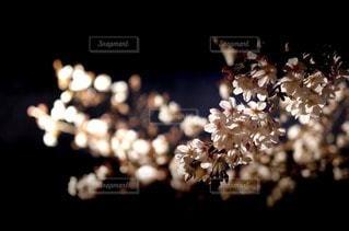 自然の写真・画像素材[14025]