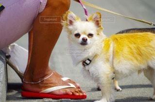 犬の写真・画像素材[109920]