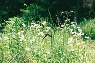 自然の写真・画像素材[70670]