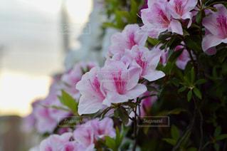 花の写真・画像素材[456778]