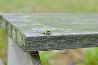 カエルの写真・画像素材[587142]