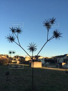 ヤシの木の前に木の写真・画像素材[720528]