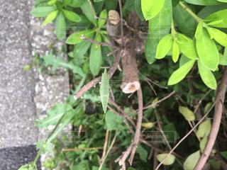 庭の植物の写真・画像素材[757149]