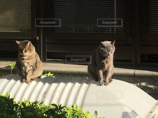 窓の前に座っている猫の写真・画像素材[916172]