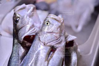 近くに魚のアップの写真・画像素材[961605]