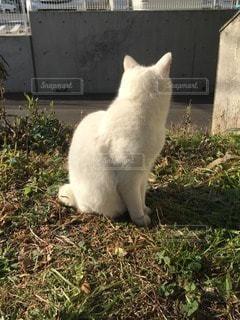 猫の写真・画像素材[70847]