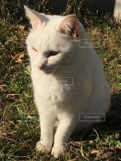 猫の写真・画像素材[70848]