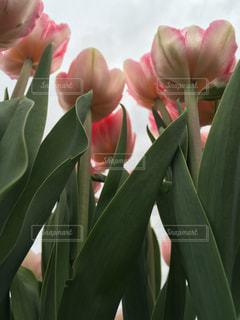 緑の葉とピンクの花 - No.737663