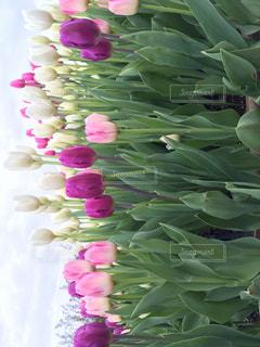近くの花のアップ - No.737667