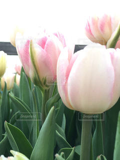 紫色の花一杯の花瓶 - No.737668