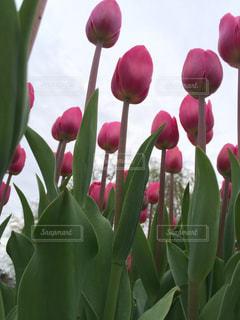 ピンクの花の束 - No.737670