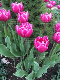 近くの植物にピンクの花のアップ - No.737692