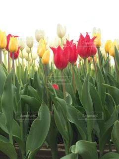 テーブルの上の花の花瓶 - No.737695