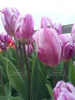 近くにピンクの花の束のアップ - No.737696