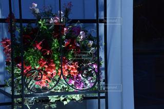 花のライトアップの写真・画像素材[1942759]
