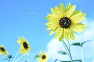 爽やかな太陽の写真・画像素材[3531738]