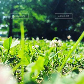 一輪の花の写真・画像素材[1974840]