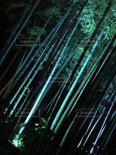 竹林の写真・画像素材[1969080]
