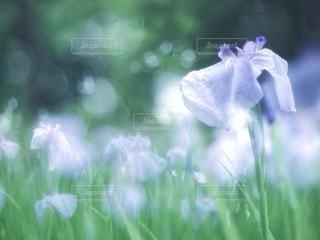 自然の写真・画像素材[74662]