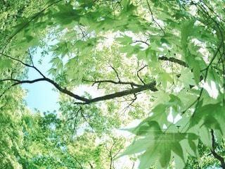 自然の写真・画像素材[74663]
