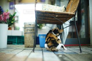 猫の休日の写真・画像素材[811816]