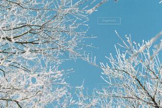 近くの木のアップの写真・画像素材[997967]
