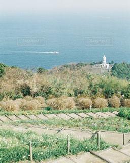 水仙と海の写真・画像素材[997968]