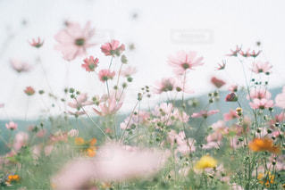 近くの花のアップの写真・画像素材[1619904]