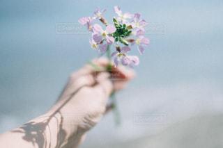 花と海の写真・画像素材[1835592]