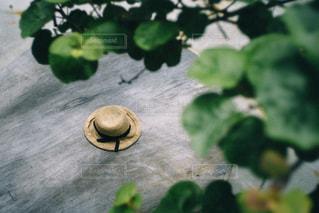 麦わら帽子の写真・画像素材[3218253]