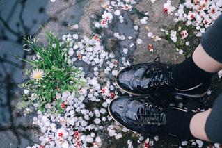 地面に落ちてる花弁と足元の写真・画像素材[3218239]