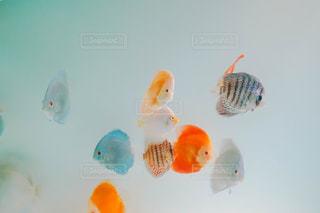 水槽の魚の写真・画像素材[3218297]