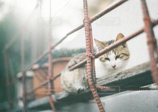 枝に座っている猫の写真・画像素材[3218294]