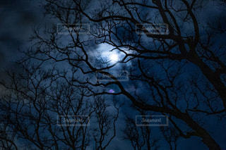 青い夜空と木の写真・画像素材[1916571]
