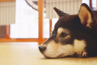 犬の写真・画像素材[1982464]