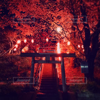 夜桜の写真・画像素材[1999946]