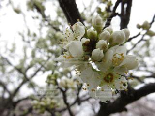 木の枝に花の花瓶の写真・画像素材[1923710]