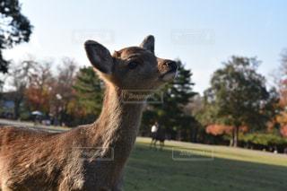小鹿の写真・画像素材[1920769]