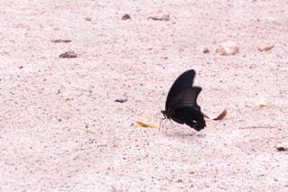 砂浜の上の蝶の写真・画像素材[1920770]