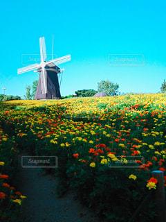 花畑と風車の写真・画像素材[1922150]