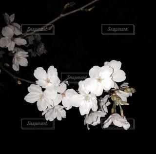 花の写真・画像素材[126852]