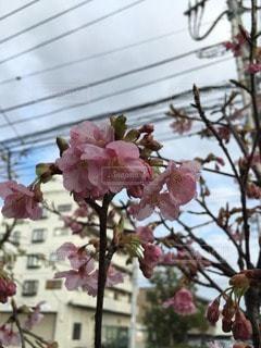 花の写真・画像素材[24268]