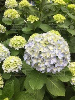 花の写真・画像素材[25046]