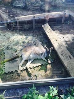 動物の写真・画像素材[26493]
