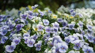 近くの花のアップの写真・画像素材[1923041]