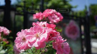 近くの植物にピンクの花のアップの写真・画像素材[1923070]