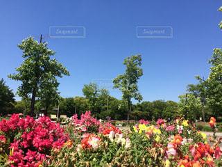 公園の写真・画像素材[708737]