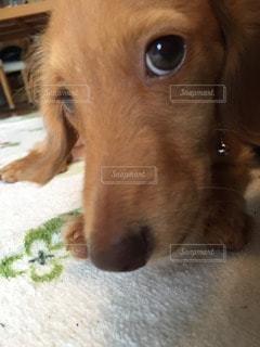 犬の写真・画像素材[71296]
